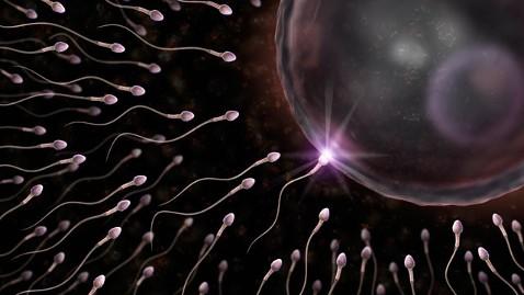 Spermatozoi1